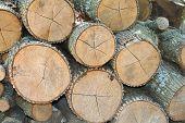 Tree logs pile