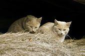 Gatos selvagens fazenda