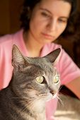 Closeup of a blue tabby cat, with a young woman looking at the cat on the background