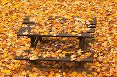 Bench in autumn park with foliage, Autumn landscape.