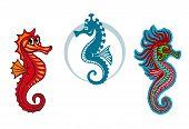 Funny Underwater Seahorse Or Hippocampus