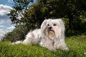 Watchful Dog