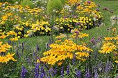 Beautiful Flowerbed Yellow And Blue