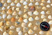 Seashells And Compass