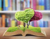 Open book in green grass, nature