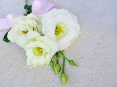 White Eustoma (lisianthus) Flowers