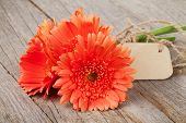 Orange gerbera flowers with tag on wooden table