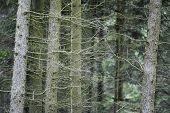 Thin tree trunks, close-up