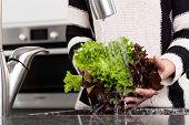Woman Rinsing Lettuce