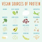 Vegan sources of protein.