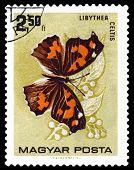 Vintage  Postage Stamp. Butterfly Libyyhea Celtis.