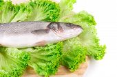 Fresh seabass fish on lettuce.
