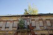 Tree On A House Wall