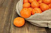 Ripe Tangerines  In Burlap Bag