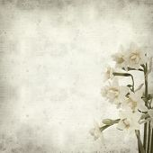 image of narcissi  - textured old paper background with doule narcissi