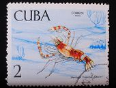 Cuba - Circa 1969: Postage Stamp Printed In Cuba Shows A Color Image Underwater Creatures Bristling