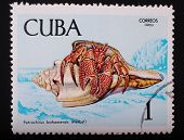 Cuba- Circa 1969: Postage Stamp Printed In Cuba Shows A Color Image Underwater Creatures Crab Bagems