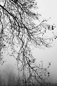 foto of dead plant  - Black and White of dead plant in winter - JPG