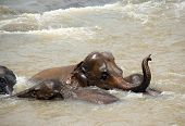 Elephants Taking a Bath