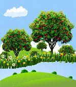 Landscape Apple Orchard