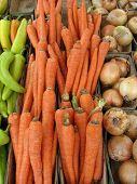 Carrots 311