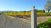 Marlborough Winery Views