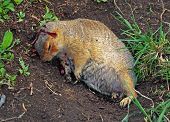 picture of groundhog day  - a dead squirrel on the ground with blood - JPG