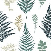 image of fern  - Vector illustration of fern and grass seamless pattern - JPG