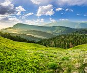 stock photo of conifers  - composite landscape with valley with wild grass near conifer forest in high mountains in morning light - JPG