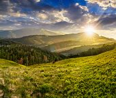 picture of conifers  - composite landscape with valley with wild grass near conifer forest in high mountains in sunset light - JPG