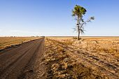 Lone Tree On A Dirt Road