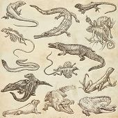 stock photo of freehand drawing  - LIZARDS  - JPG