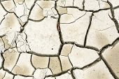 picture of mud  - Plant in dried cracked mud on summer day - JPG