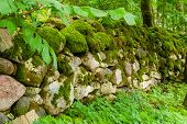 pic of lichenes  - Old granite wall in forest covered with moss and lichen - JPG