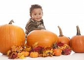 picture of gourds  - Adorable toddler sitting next to some giant pumpkins - JPG