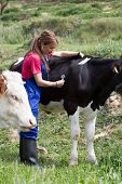 pic of veterinary  - Veterinary on a farm performing a physical examination in a cow - JPG