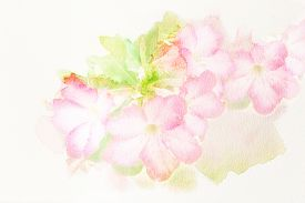 stock photo of azalea  - Abstract watercolor illustration of blossom pink flower  - JPG
