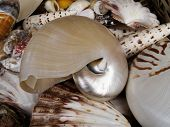 image of pearlescent  - Background of different marina shells in a basket - JPG
