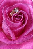 picture of pink rose  - romantic way to present a gold ring inside beautiful rose on valentine day - JPG