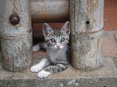 Gato entre bambú