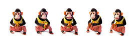 image of chimp  - Collection of Vintage antique monkeys isolated on white background - JPG