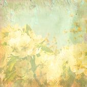 Jasmine In Spring - Abstract Background