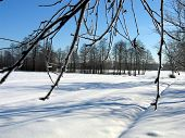 foto of winter scene  - winter scene - JPG