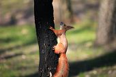 Furry Squirrel On The Tree In Spring City Park poster