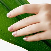 Beautiful Woman Hands. Spa And Manicure Concept. Female Hands With French Manicure. Soft Skin, Skinc poster