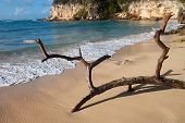 Log On Sand Beach. Sandy Beach Log View. Log Beach Scene. Beach Log View poster