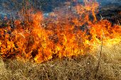 Dry Grass Burning In The Forest