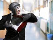 Annoyed Monkey Shouting, Indoors