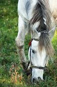 Horse On A Background Of Green Grass
