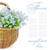 Bouquet of blue spring flowers in basket isolated on white background / Gift with love